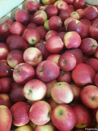 Apples fresh