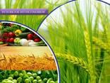 Fabrikant en leverancier van pesticiden wereldwijd - photo 1