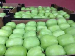 Яблоки Македония Apples Macedonia