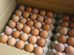Яйца Куриные - фото 2